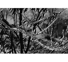 Vectors Of Ice Photographic Print