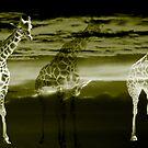 Safari by photomama4