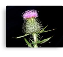 The Flower of Scotland Canvas Print
