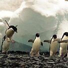 Sometimes a Penguin can&#x27;t help but show off! by Michelle Dry