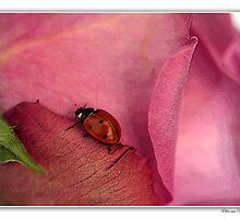 Ladybug on rose. by Ellen van Deelen