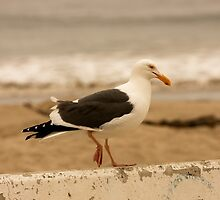 Walking Seagull by Buckwhite