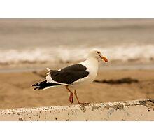 Walking Seagull Photographic Print