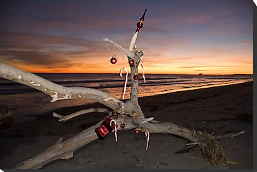 "A Beach Bum's Christmas Tree by Arthur ""Butch"" Petty"
