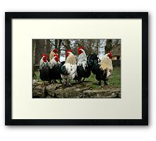 Roosters Framed Print