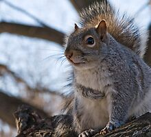 Squirrel at the park 2 by Gleb Zverinskiy