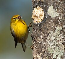 At the Suet Log by Bonnie T.  Barry