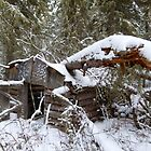 Old Trappers Cabin by MaeBelle