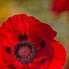 Poppy 3 by Rebecca Cozart