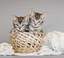2 Tabby Kittens in Yarn Basket by AndreaBorden