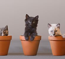 Bloomin' Meowers by AndreaBorden