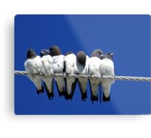 Seven Swallows Sitting Metal Print