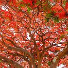 Under the Poinciana - Cleveland Qld Australia by Beth  Wode