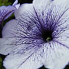 Violet Crumble by Scott Cooper