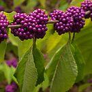 Purple On by Dawne Olson