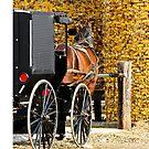 Amish Buggy Parking by Tony  Bazidlo