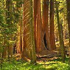 Path to Sequoias by Adam Bykowski
