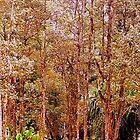 Ohia Trees in Lava Tree Park by maliaio