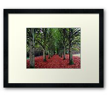 An Avenue of trees Framed Print