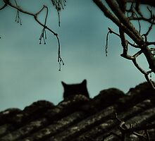 { black cat } by Louise LeGresley