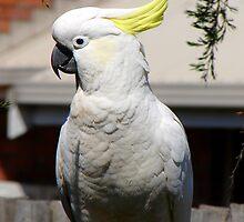 Cockatoo by ~ Fir Mamat ~