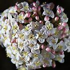 Moody Spring by Joy Watson