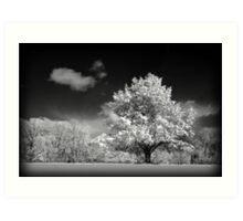 Black and White Winter Wonderland  Art Print
