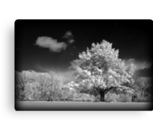 Black and White Winter Wonderland  Canvas Print