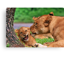 How the lion loves its baby Canvas Print