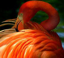 Flamingo Flow by Rock Mollica