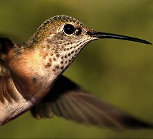 Hummer Profile in Flight by Ken  Aitchison