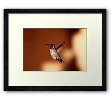 Hummer Flight Framed Print
