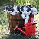 Bucket full of cuteness. by Annette Blattman