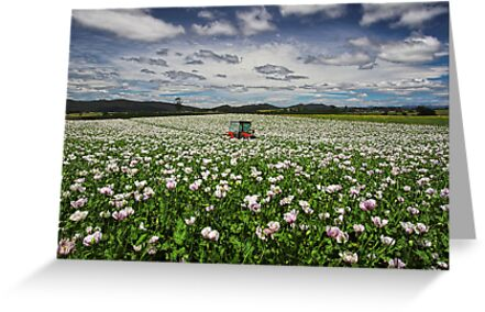 The Tractor by Peter Daalder