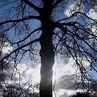 Bleeding Tree by Emmett  Cathcart