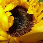 sunflower by Emmett  Cathcart