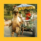 We'll take you to Taj Mahal by Lydia Cafarella