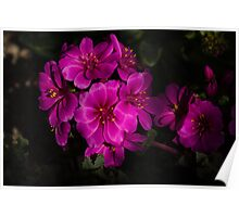 Shocking Pink and Fuchsia - a Vivid Succulent Bouquet Poster
