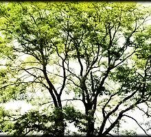Green Leaves by Ryan Houston