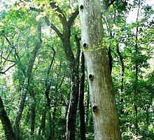 Hole-y Tree by Jenny Wright