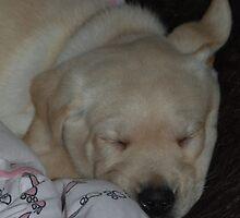 Baby Ben! by Maddie