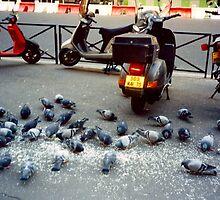 Parisian Pigeon Party, Spring 2000 by NatashaHartling