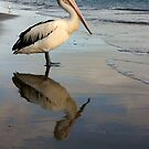 Pelican by Julie Just