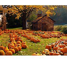 The Pumpkin Farm Photographic Print