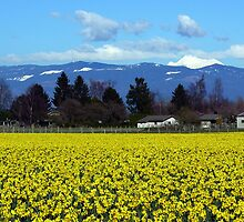 Daffodil Farm by Rick Lawler