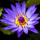 Purple Fire by Dave Lloyd