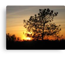 torrey pine sunset Canvas Print