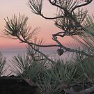 pastels &amp; pines by Bruce  Dickson