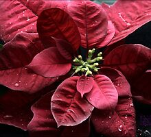A RED NEW YEAR by Tabitha B