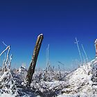 Snowy Fenceposts by amandameans